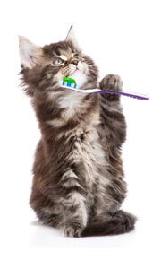 Igiene e benessere degli animali