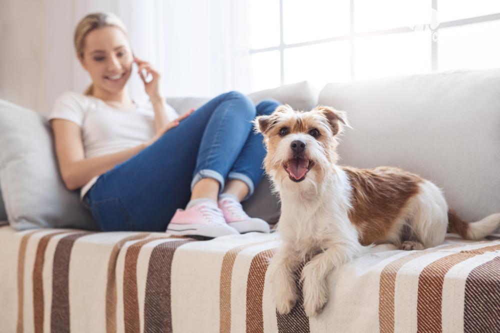 Razze di cani da appartamento di taglia media quelle consigliate