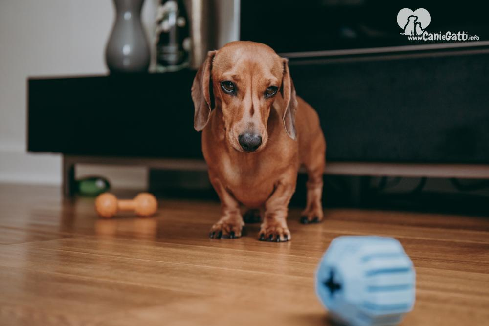 10 Razze Di Cani Di Piccola Taglia Per Appartamento Quali Scegliere