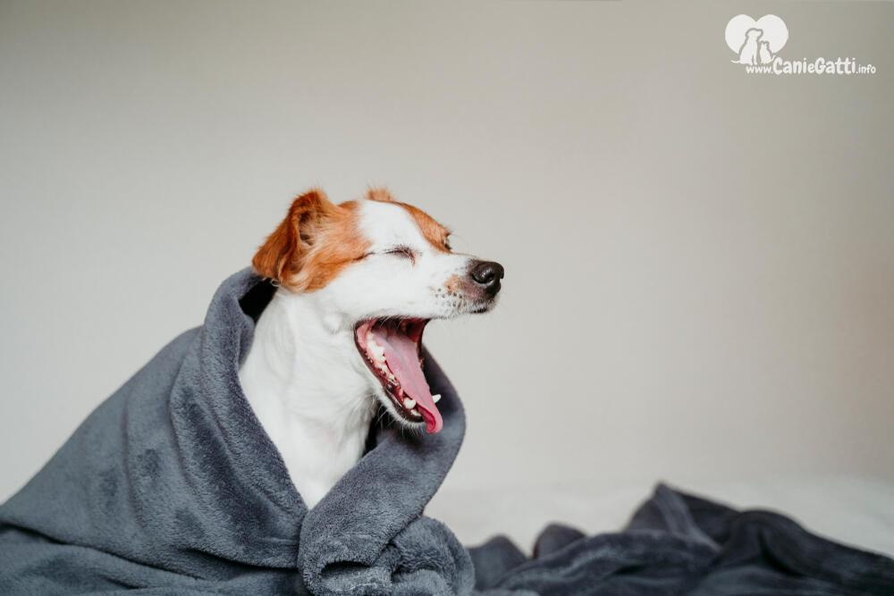Perche Il Cane Sbadiglia Cosa Significa Comportamento