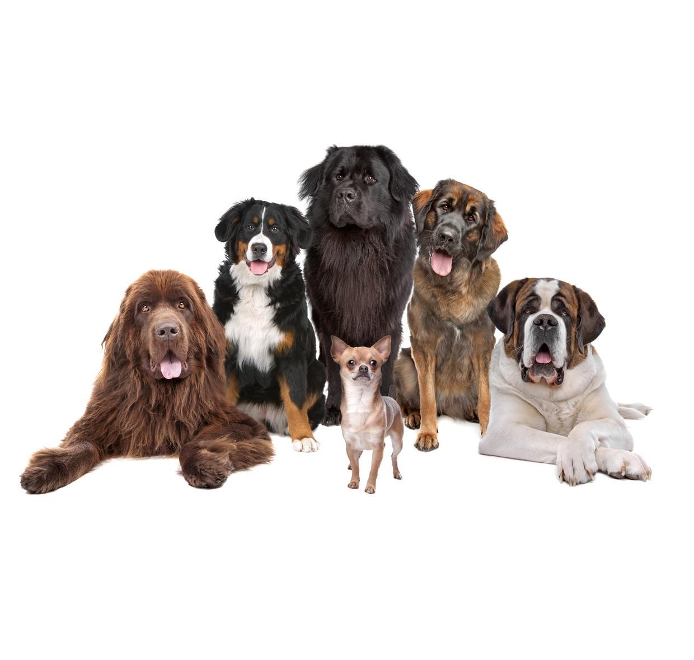 Motore di ricerca per le razze dei cani