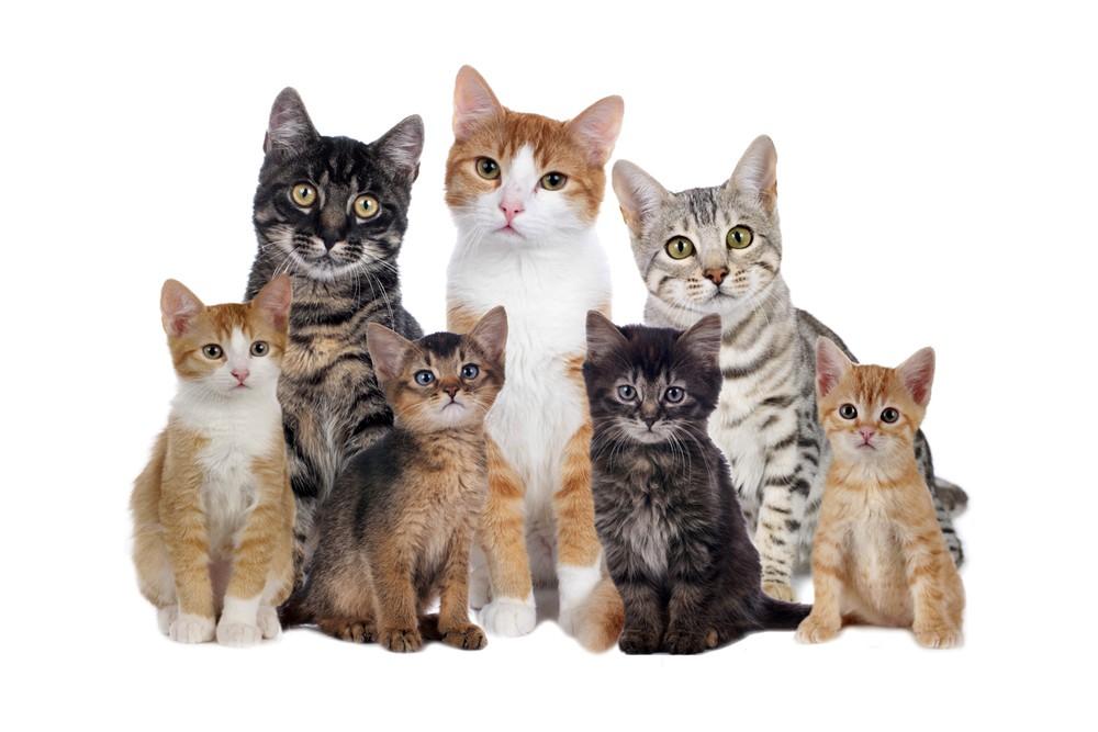 Motore di ricerca per le razze dei gatti
