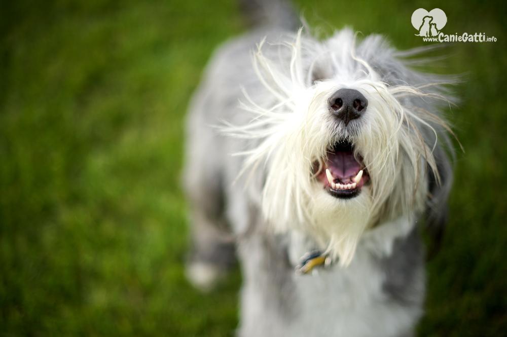 Come Insegnare a un Cane a Non Abbaiare alle Persone