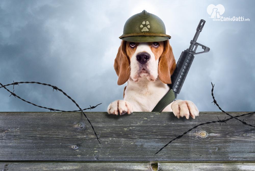 I migliori cani da guardia per appartamento ecco le razze