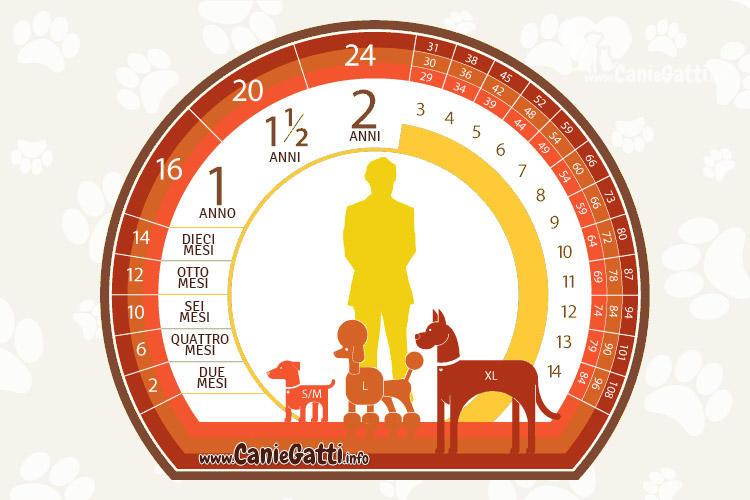 tabella anni canini anni umani